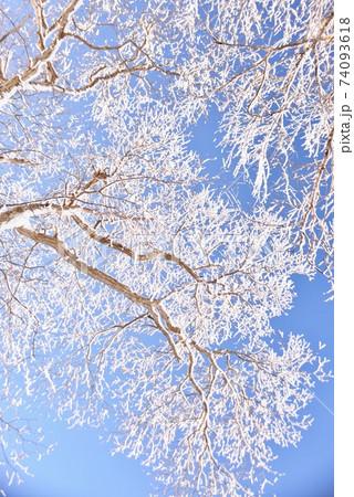 快晴の青空をバックに咲く霧氷の花 74093618