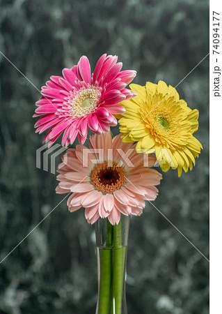 ガーベラの花と水滴 74094177
