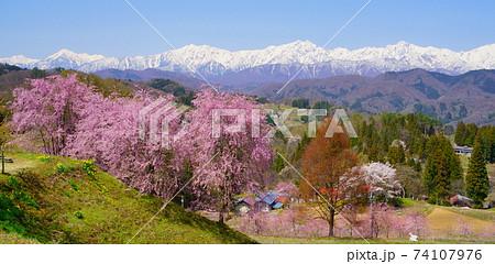 信州小川村 立屋番所桜の里と北アルプスの峰々 74107976