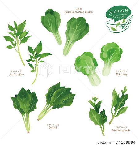 緑の野菜のイラスト / アソート / 手描き風 74109994