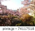あたみ桜 74117518
