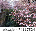 あたみ桜と糸川 74117524