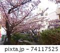 あたみ桜 74117525