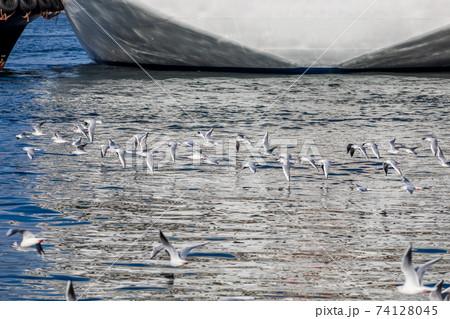 港に停泊する船舶の周りの水面付近を飛ぶかもめ 74128045