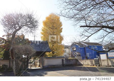 埼玉県比企郡川島町の金剛寺の風景 74134407