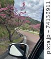 八重岳の桜 74136911