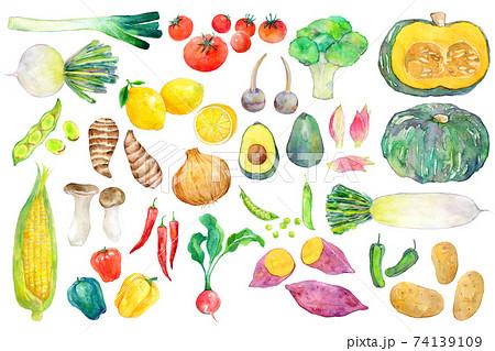 水彩イラスト 緑黄色野菜 74139109