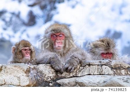 気持ちよく温泉に浸かるファミリー猿 74139825