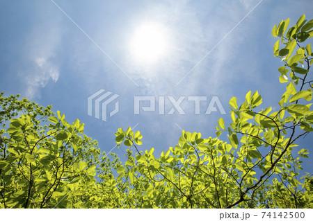 青空と新緑風景-5-若葉色の新緑風景 74142500