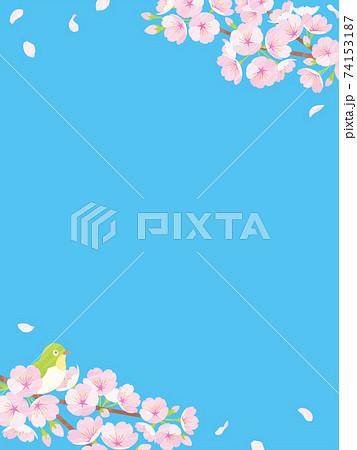桜の背景素材 ブルー 74153187