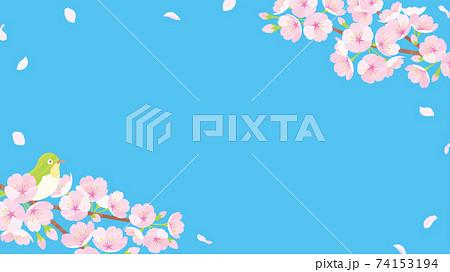 桜の背景素材 ブルー 74153194