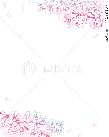桜の背景素材 グラデーション 74153197