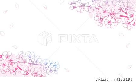桜の背景素材 グラデーション 74153199