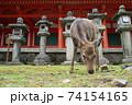 春日大社の鹿 74154165