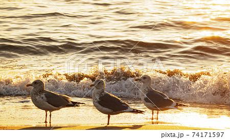 湘南三浦半島の神奈川県三浦市三浦海岸の夜明け 74171597