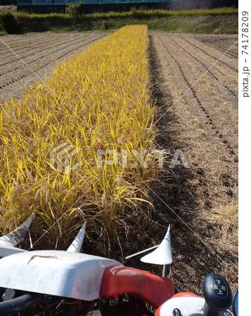 トラクターから見た稲刈りをしている様子 74178209
