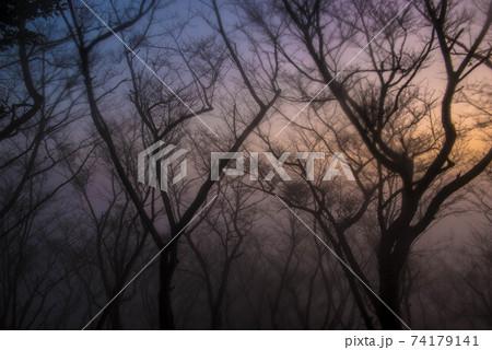霧の中 74179141