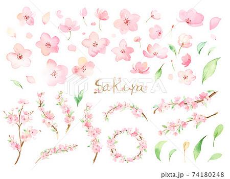 手描き水彩|桜のパーツ イラスト セット 74180248