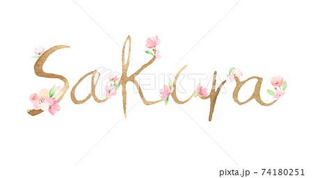 手描き水彩|Sakura 文字 イラスト 74180251