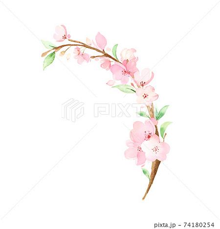 手描き水彩|桜の枝 イラスト 74180254