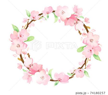 手描き水彩 桜の枝 円フレーム イラスト 74180257