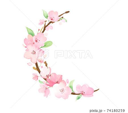 手描き水彩 桜の枝 イラスト 74180259