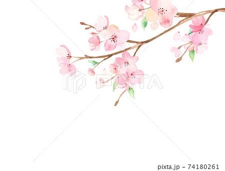 手描き水彩|桜の枝 イラスト 74180261