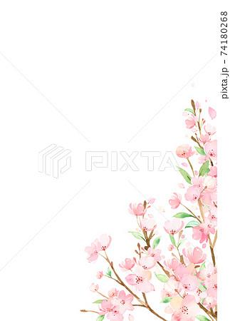 手描き水彩 桜の枝 イラスト 74180268