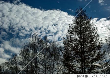 林立する木立と青い空を彩る感動的な雲 74186657
