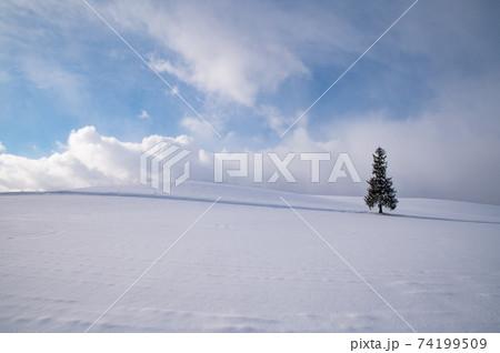 冬美瑛晴れた日のクリスマスツリーの木 74199509