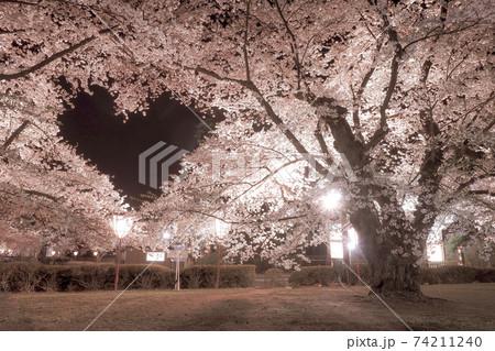 【青森】弘前公園の空に浮かぶ桜のハートマーク 74211240