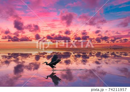 朝焼けの水面を静かに飛び立つ野鳥 74211957