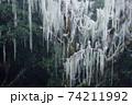 山林 植物 工場 74211992