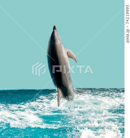 水しぶきをあげてジャンプするイルカ 74219995