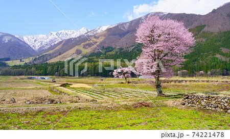信州白馬村田畑に咲くhakuba47の桜 74221478