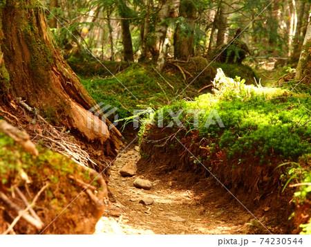 夏の長野県南八ヶ岳へと続く林道の中 74230544