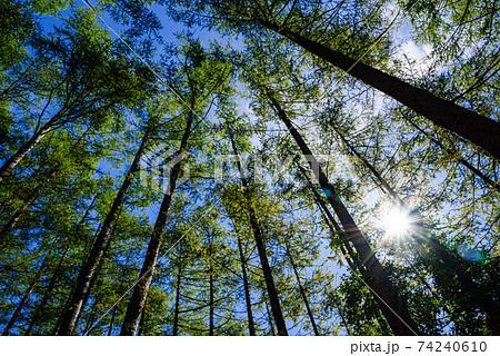 山奥の樹林帯と青空と太陽 74240610