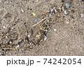 海洋プラスチック問題 74242054