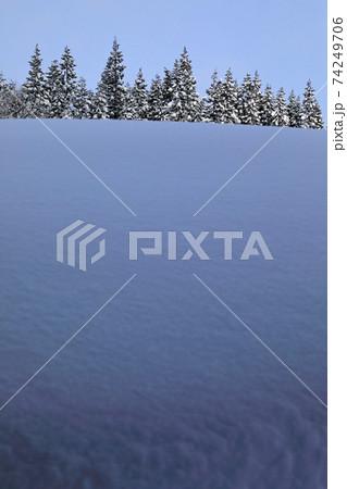 豪雪と朝日を浴びるスギ林 福島県只見町 74249706