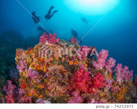 カラフルな珊瑚の根とスクーバダイバー (メルギー諸島、ミャンマー) 74252975
