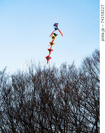 お正月の風物詩 晴天の冬空に上がる連凧 74258227