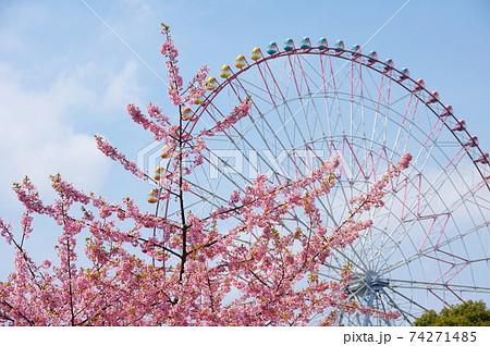 河津桜と観覧車 74271485