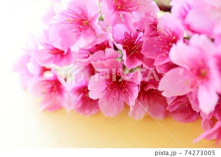 桜 黄色バック 74273005