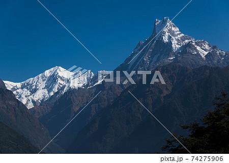 アンナプルナⅢ峰(7555ⅿ)と霊峰マチャプチャレ(6997ⅿ) 74275906