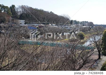 2月 世田谷592野川(神明橋)と国分寺崖線(区立成城みつ池緑地方面) 74288406