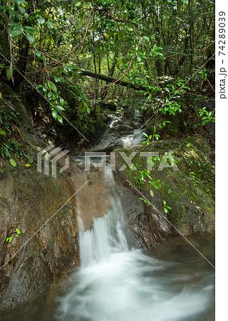 緑の森をバックに岩盤の上を流れる沢 74289039