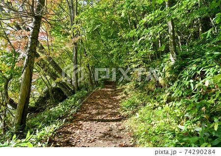 晩秋の和琴半島の遊歩道の情景@屈斜路湖、北海道 74290284
