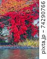 水辺の紅葉 74290766