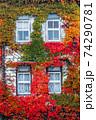 紅葉したナツヅタで絡み覆われた建物 74290781