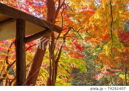 諏訪峡 もみじ公園 遊歩道より  秋の景色 みなかみ町    74291407